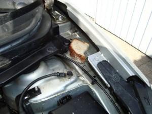 brød i motorrum